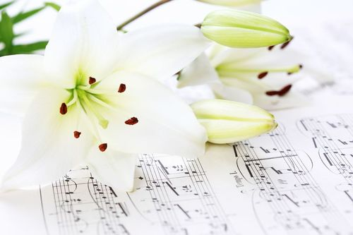 White Lily and sheet music